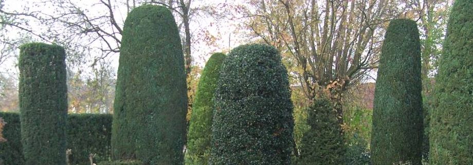 in vorm snoeien van coniferen en taxus - tuinonderhoud - projecten